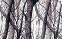 Redfield S T And H Camo Graphic Dipping Patterns